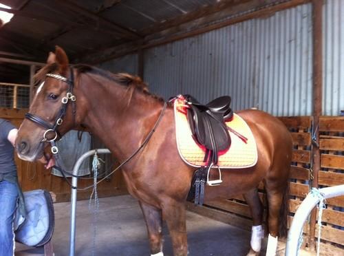 Cheryl Horse