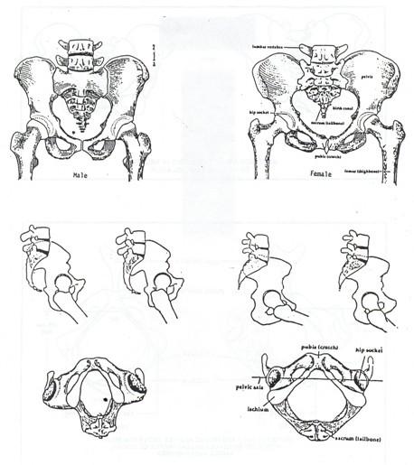 Pelvis Disgram