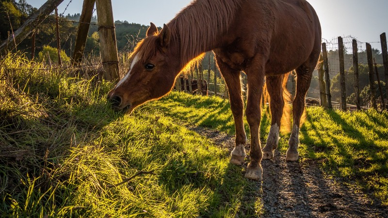 SEASONAL EQUINE HEALTH AND NUTRITION