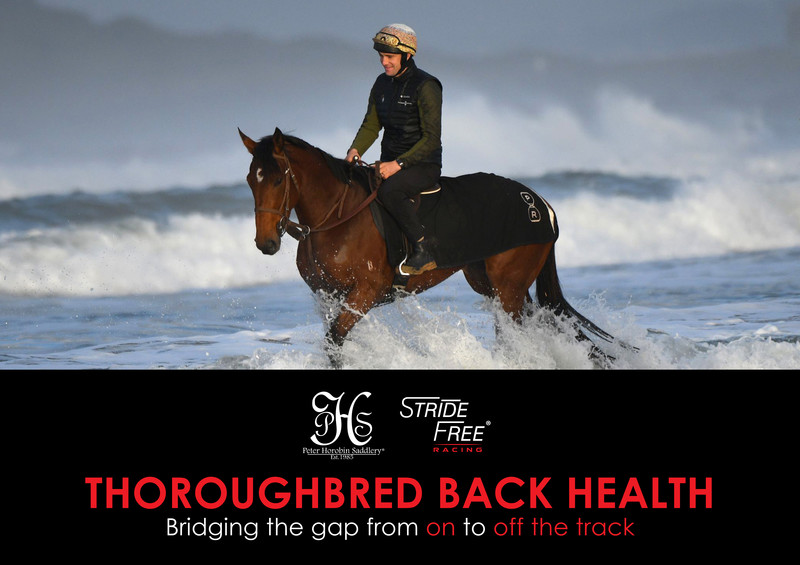 Thoroughbred Back Health Cover