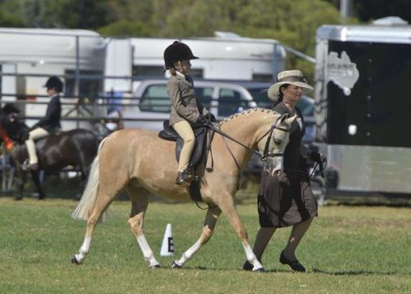Pony Pony